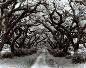 Path in the Oaks II, Louisiana by Monte Nagler