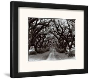 Path in the Oaks II, Louisiana by Monte Nagler