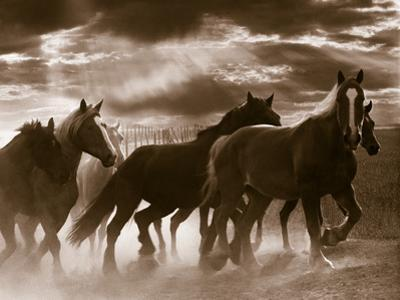 Running Horses And Sunbeams, Rothbury, Michigan