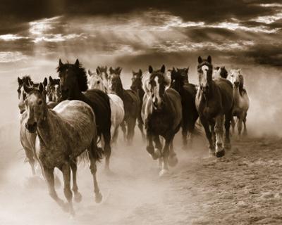 Running Horses by Monte Nagler