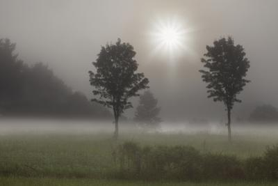 Two Trees & Sunburst, Logan, Ohio '10 by Monte Nagler