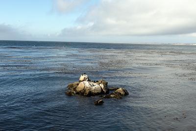 Monterey Bay-Carol Highsmith-Photo