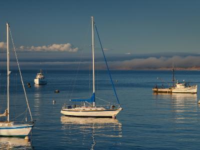 Monterey, California, United States of America, North America-Alan Copson-Photographic Print
