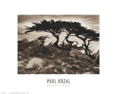 Monterey Cypress-Paul Kozal-Art Print