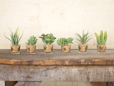 Monteria Succulent Set