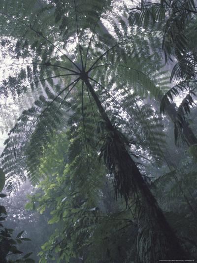 Monteverde Cloud Forest, Costa Rica-Michele Westmorland-Photographic Print