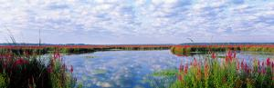 Montezuma National Wildlife Refuge, New York State, USA