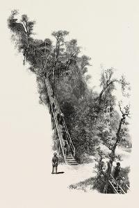 Montreal, L'Escalier, Canada, Nineteenth Century