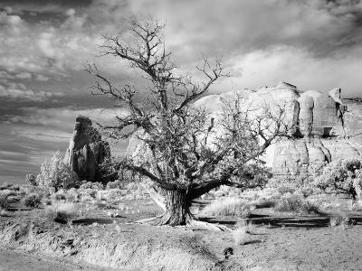Monument Valley, Arizona-Carol Highsmith-Photo