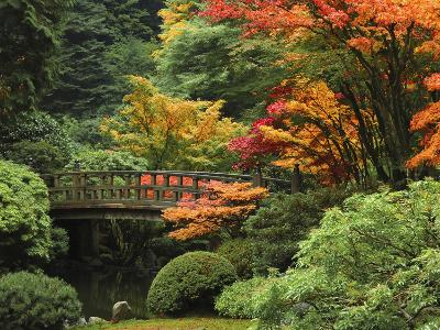 Moon Bridge in Autumn: Portland Japanese Garden, Portland, Oregon, USA-Michel Hersen-Photographic Print
