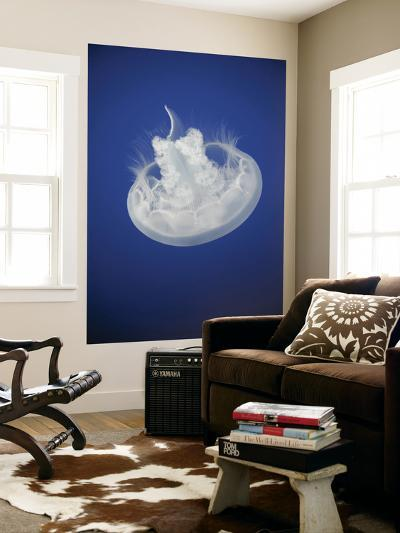 Moon Jellyfish (Aurelia Aurita)-Michele Falzone-Wall Mural