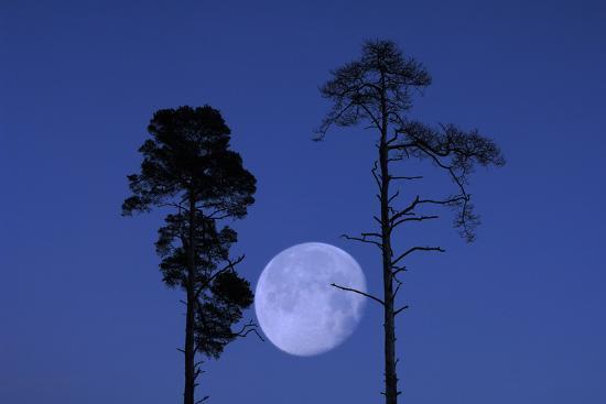 Moon, Trees, Jaws, Silhouette, at Night-Herbert Kehrer-Photographic Print