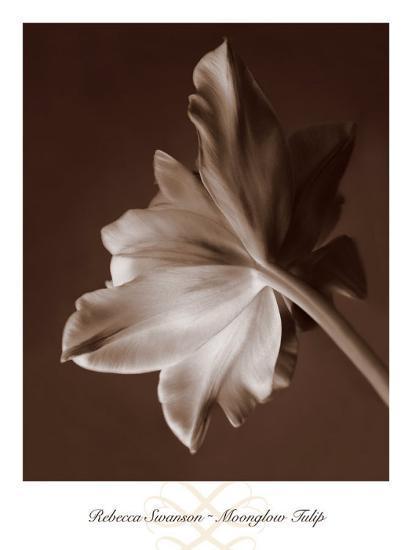 Moonglow Tulip-Rebecca Swanson-Art Print