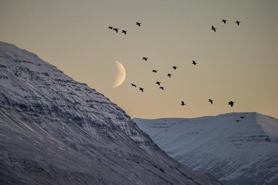 Moonlight over Snow Covered Mountain-Arctic-Images-Photographic Print