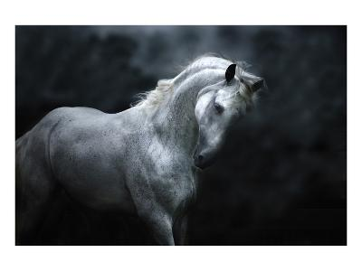 Moonlight Silver Stallion-Melanie Snowhite-Art Print