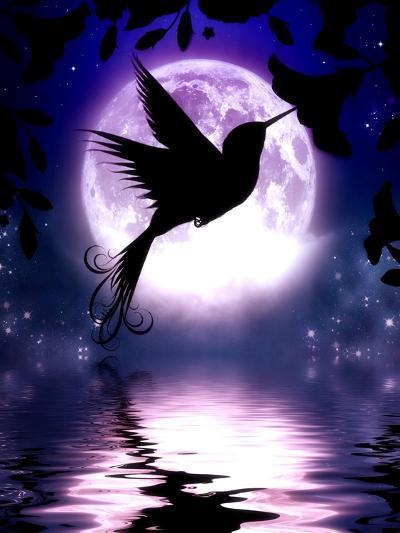 Moonlit Hummingbird-Julie Fain-Art Print