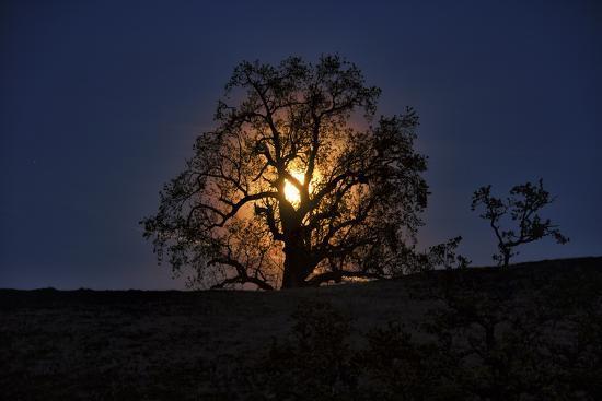 Moonrise and Tree Silhouette, Big Sur, California-Keith Ladzinski-Photographic Print