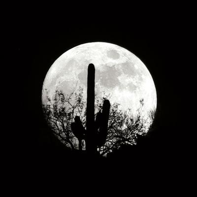 Moonrise in May II-Douglas Taylor-Photographic Print