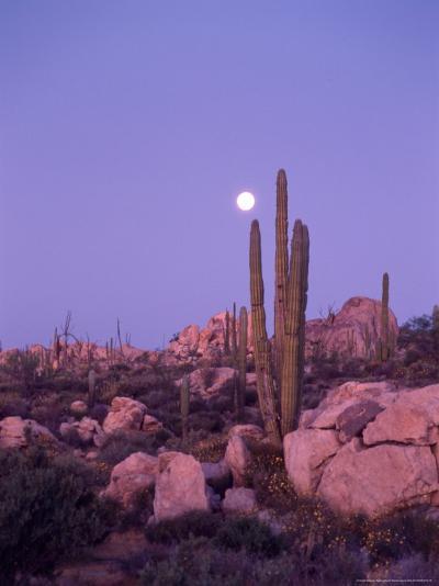 Moonset Desert Scenic and Boojum Cactus, Catavina, Mexico-Stuart Westmoreland-Photographic Print