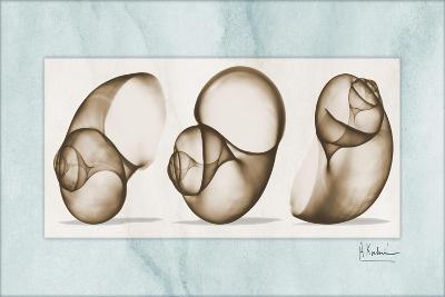 Moonsnails Trio-Albert Koetsier-Art Print