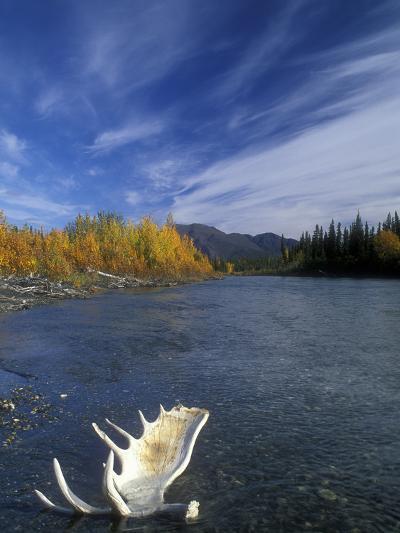 Moose Antler in the Hunts River, Brooks Range, Kobuk National Park, Alaska, USA-Tom Walker-Photographic Print