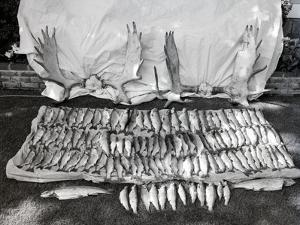 Moose Antlers and Fish on Display after Trip, Ca. 1948