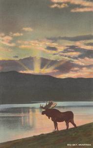 Moose at Sunset, Big Sky, Montana