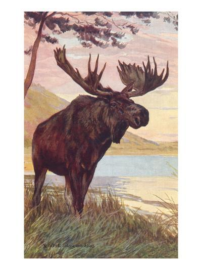 Moose by Lake--Art Print