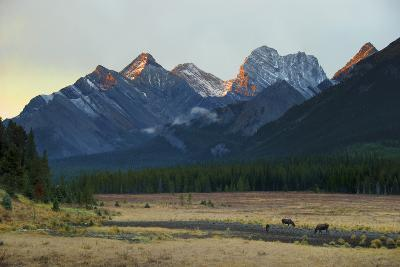 Moose Grazing at Sunset with Mountains in the Background; Alberta Canada-Design Pics Inc-Photographic Print
