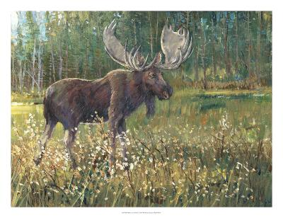 Moose in the Field-Tim O'toole-Art Print