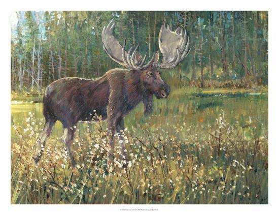 Moose in the Field-Tim O'toole-Art Print
