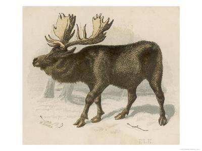 Moose or Elk--Giclee Print