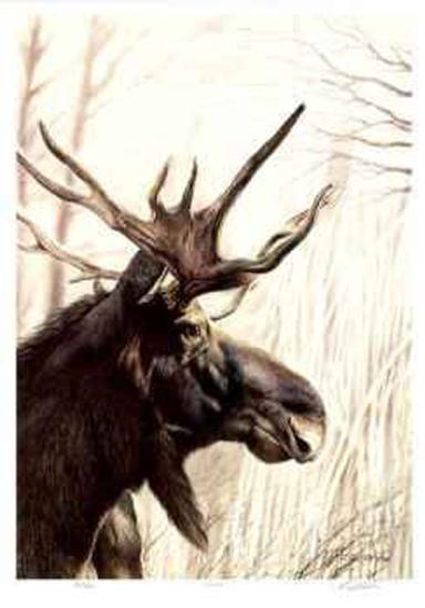 Moose-Robert Pow-Collectable Print