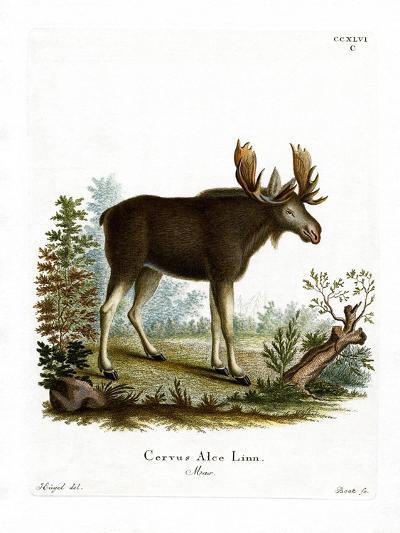 Moose--Giclee Print