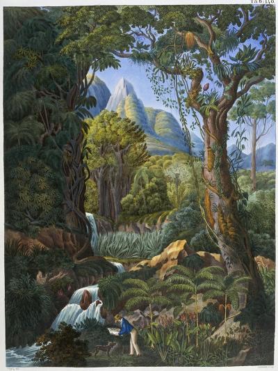 Morenia Poppigiana and Forest--Giclee Print