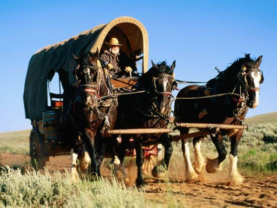 Mormon Man Driving Horse Carriage, Mormon Pioneer Wagon Train to Utah, Near South Pass, Wyoming-Holger Leue-Photographic Print