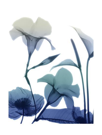 Morning Bloom 1-Albert Koetsier-Art Print