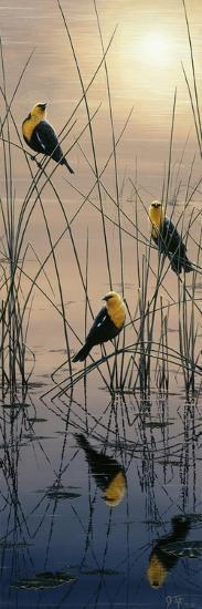 Morning Call - Yellow Headed Blackbirds-Jeff Tift-Giclee Print