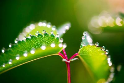 Morning Dew, Nature-Alfons Rumberger-Photographic Print