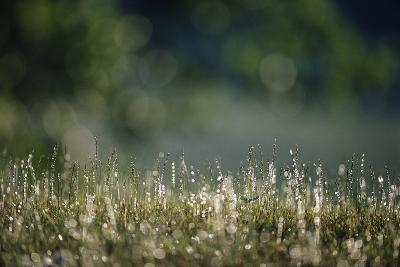 Morning Dew on Grass-Paul Souders-Photographic Print