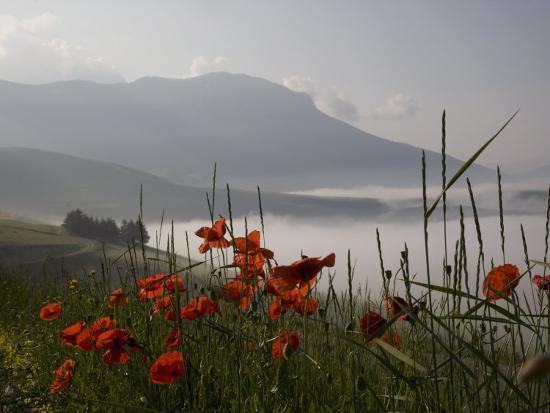 Morning Fog, Castelluccio Di Norcia, Highland of Castelluccio Di Norcia, Norcia, Umbria, Italy-Angelo Cavalli-Photographic Print