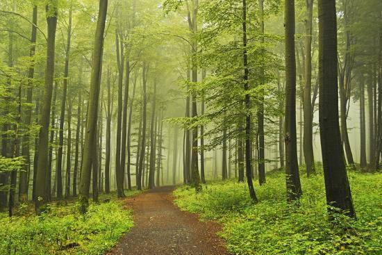 Morning Fog in Forest Near Bad Marienberg, Westerwald, Rhineland-Palatinate, Germany, Europe-Jochen Schlenker-Photographic Print