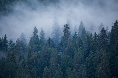 Morning Fog Rises Off of a Spruce, Picea, Forest in Alaska's Inside Passage-Erika Skogg-Photographic Print