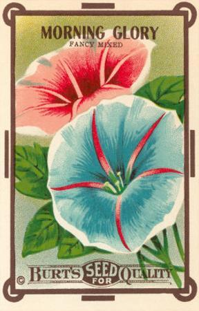 Morning Glory Seed Packet