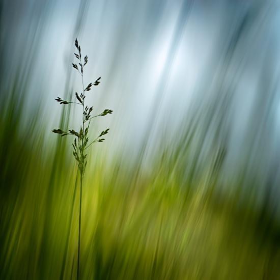 Morning Grass-Ursula Abresch-Photographic Print