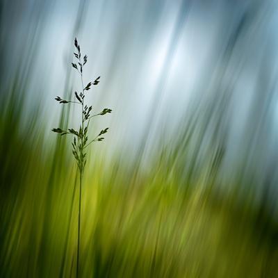 https://imgc.artprintimages.com/img/print/morning-grass_u-l-q1bk2970.jpg?p=0