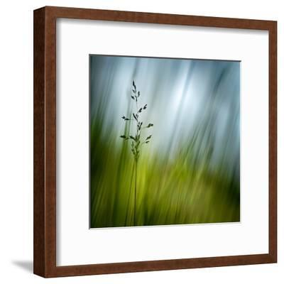 Morning Grass-Ursula Abresch-Framed Premium Photographic Print