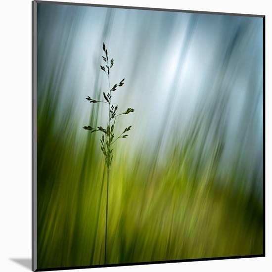 Morning Grass-Ursula Abresch-Mounted Premium Photographic Print