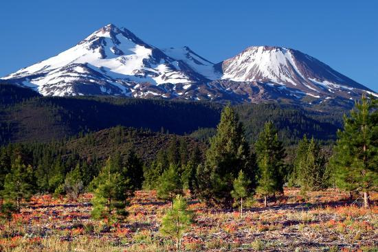 Morning in Shasta-Douglas Taylor-Photographic Print