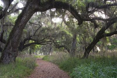 https://imgc.artprintimages.com/img/print/morning-light-illuminating-the-moss-covered-oak-trees-in-florida_u-l-pyp89z0.jpg?p=0